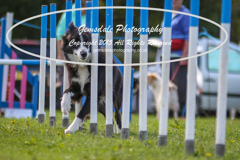 Southdowns Agility 25th September 2016-4006