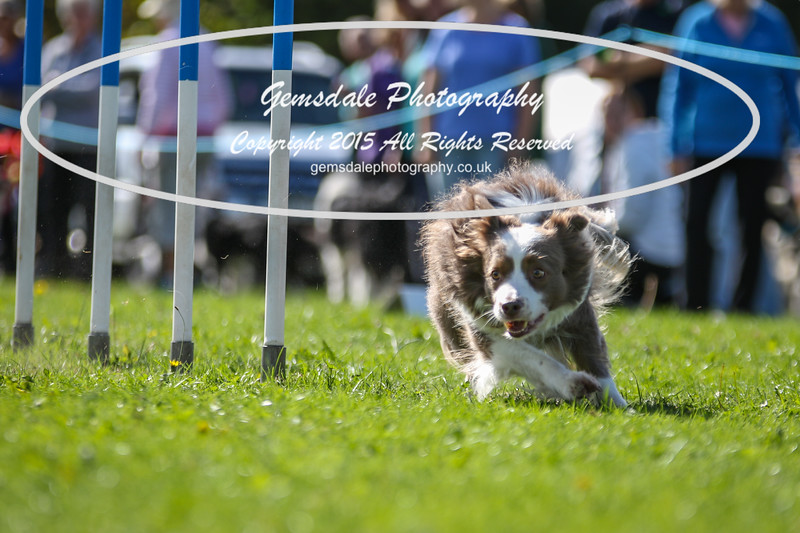 Southdowns Agility 25th September 2016-4028