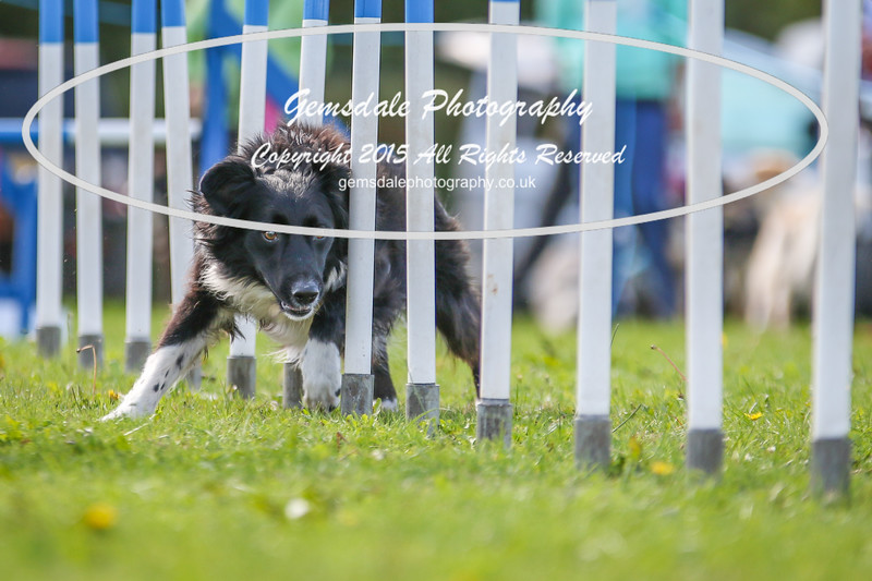 Southdowns Agility 25th September 2016-4000