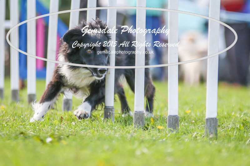 Southdowns Agility 25th September 2016-4001
