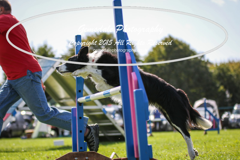 Southdowns Agility 25th September 2016-4025