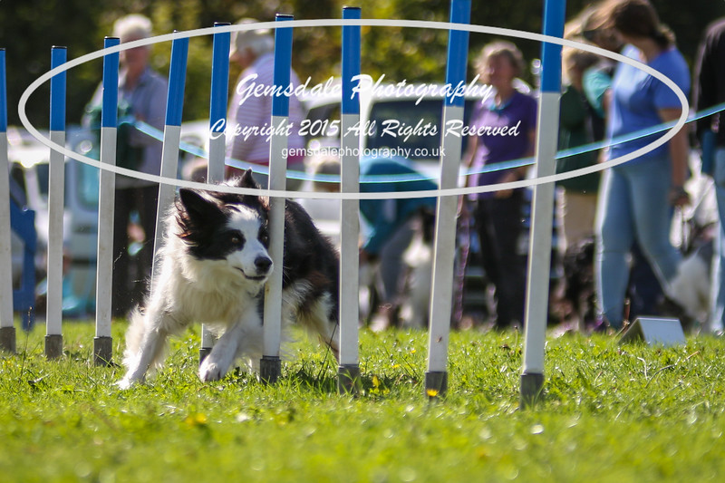 Southdowns Agility 25th September 2016-4034