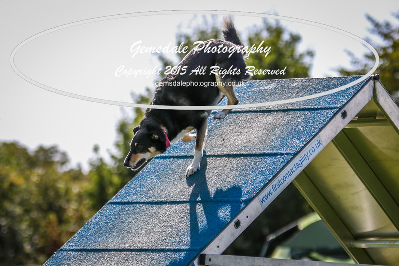 Southdowns Agility 25th September 2016-4010