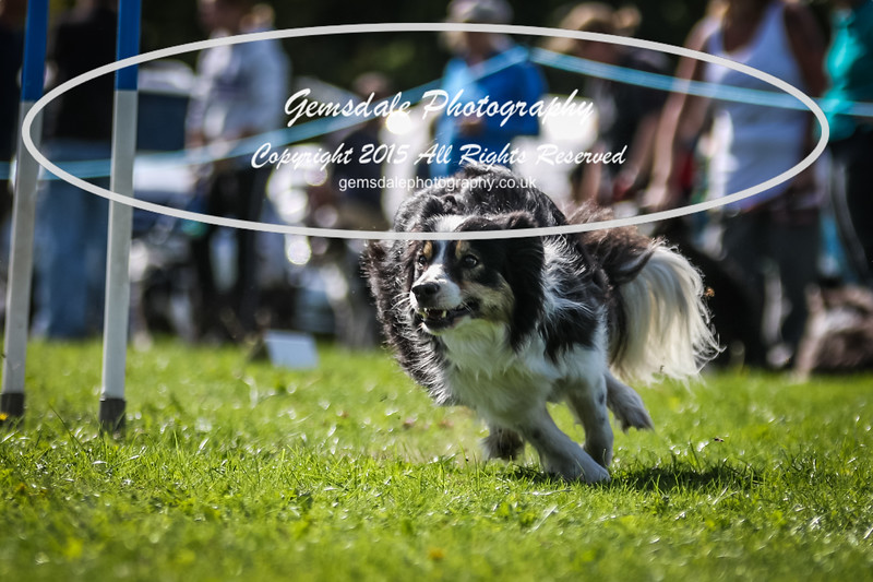 Southdowns Agility 25th September 2016-4046