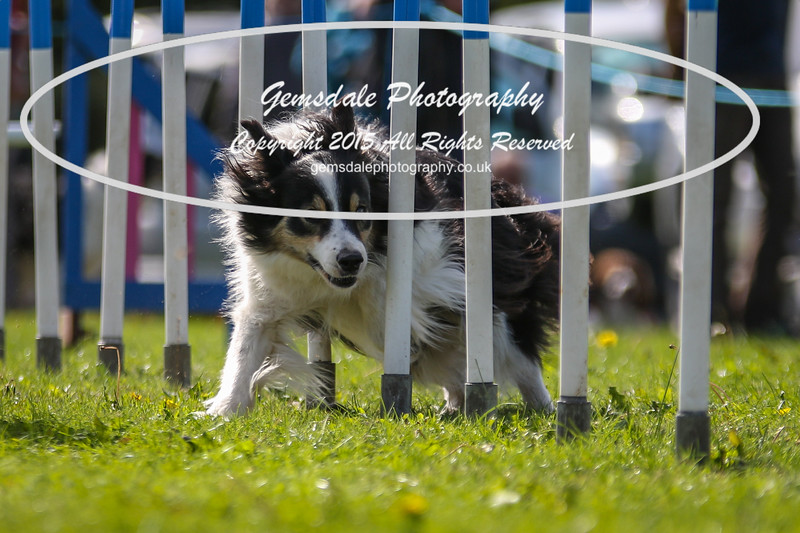 Southdowns Agility 25th September 2016-4043