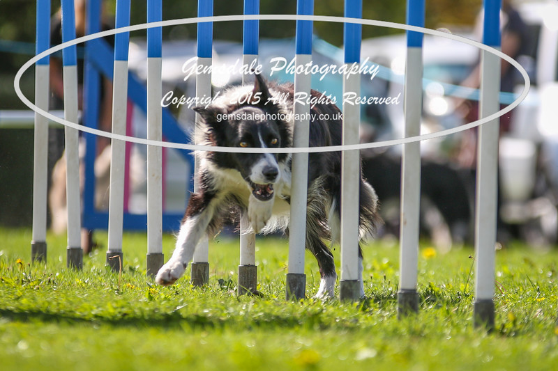 Southdowns Agility 25th September 2016-4021