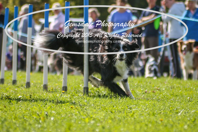 Southdowns Agility 25th September 2016-4032