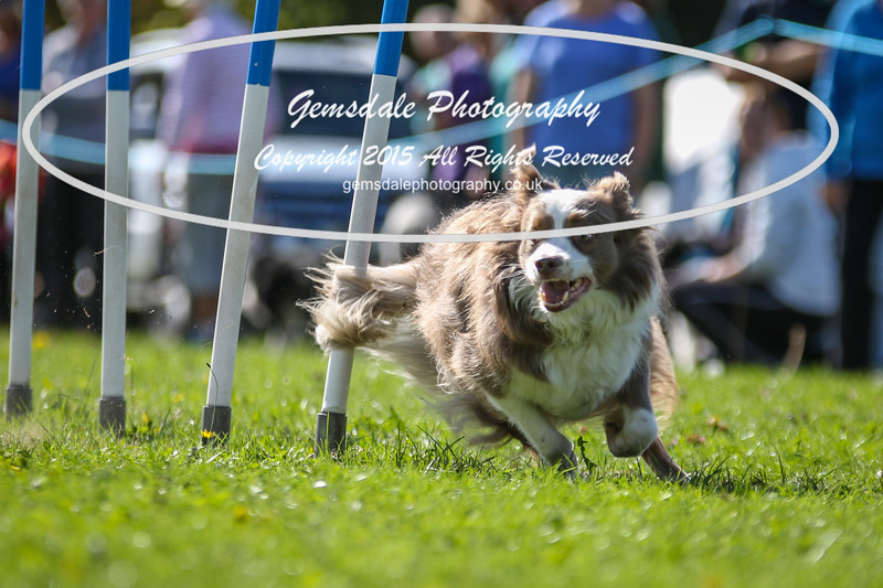 Southdowns Agility 25th September 2016-4027