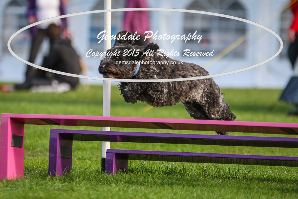 Southdowns Agility 25th September 2016-2034