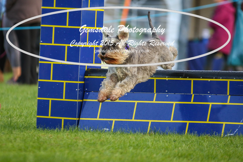 Southdowns Agility 25th September 2016-2014