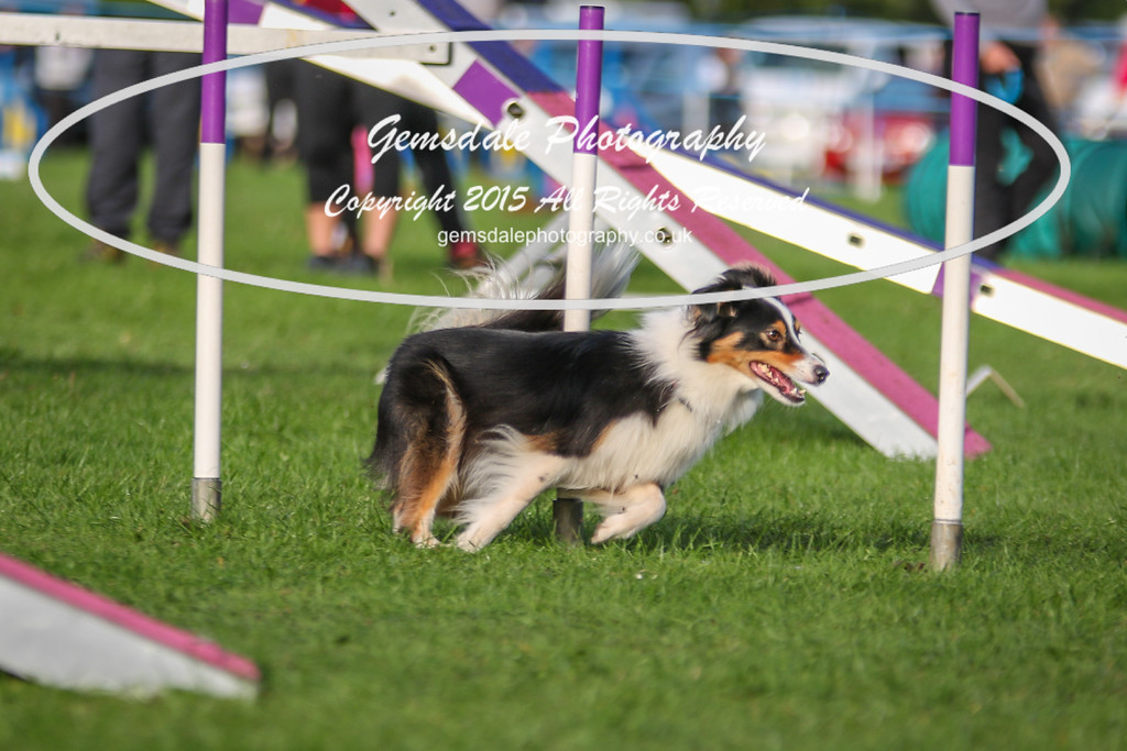 Southdowns Agility 25th September 2016-2044