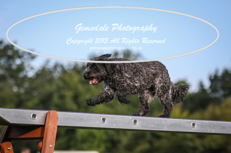 Southdowns Agility 25th September 2016-2035