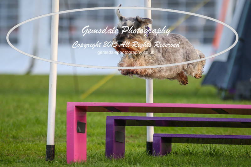 Southdowns Agility 25th September 2016-2010