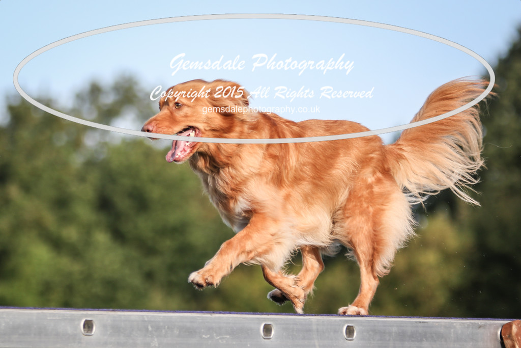 Southdowns Agility 25th September 2016-2033