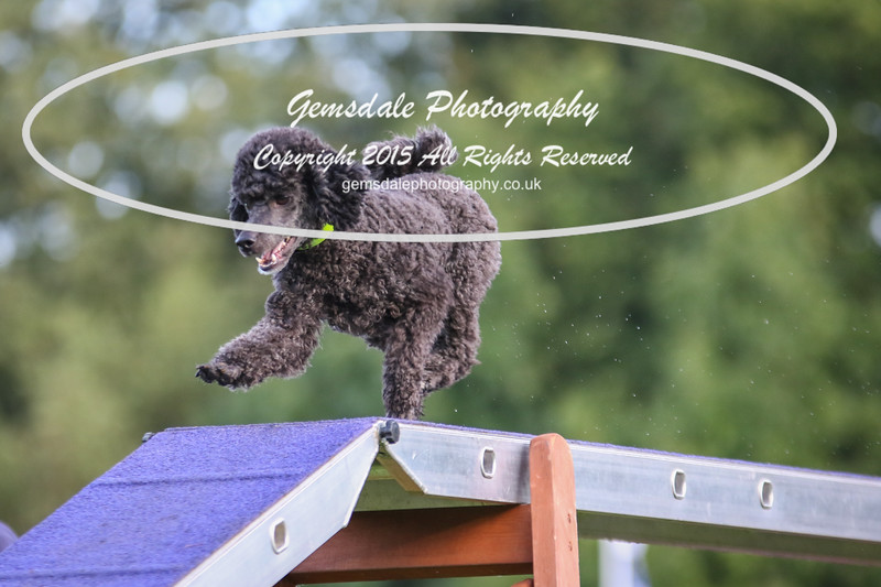 Southdowns Agility 25th September 2016-2007