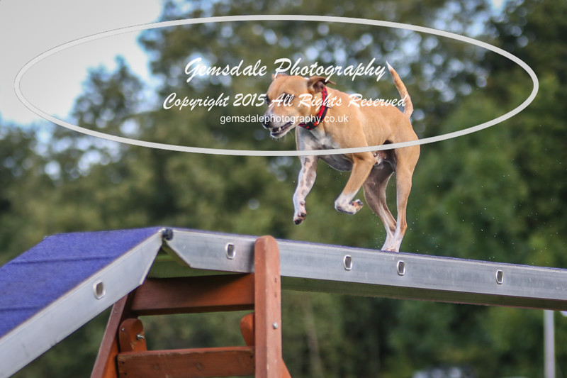 Southdowns Agility 25th September 2016-2018