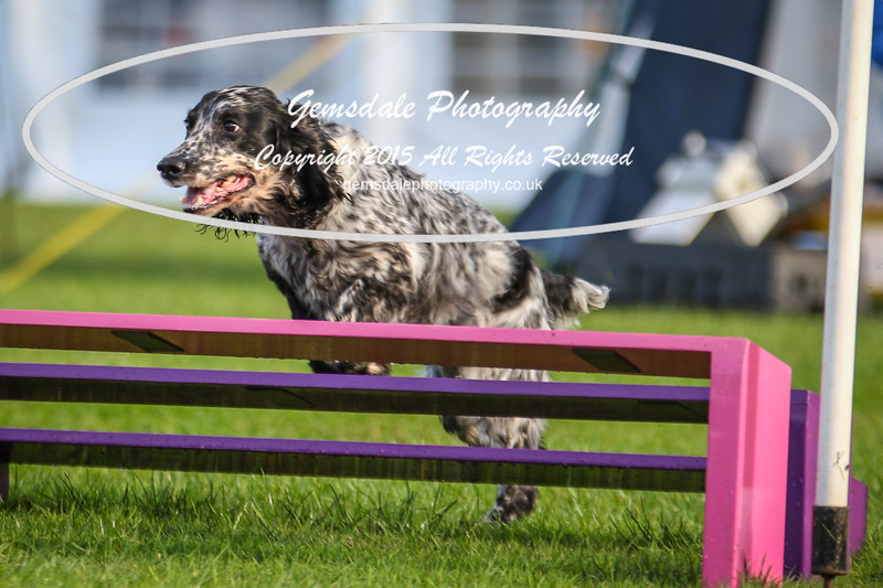 Southdowns Agility 25th September 2016-2036