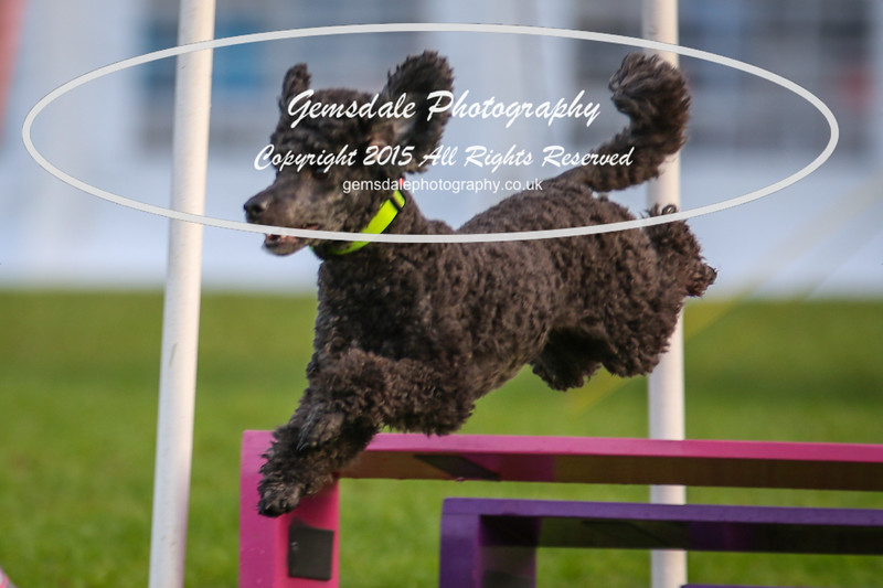 Southdowns Agility 25th September 2016-2006