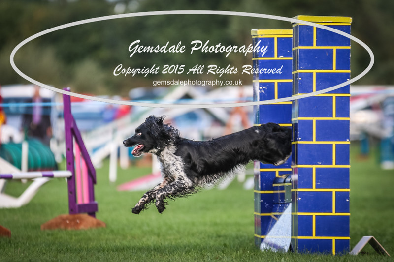Southdowns Agility 25th September 2016-2028