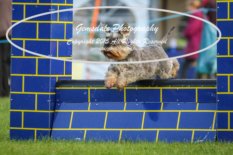 Southdowns Agility 25th September 2016-2013