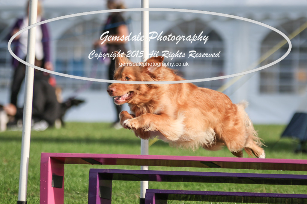 Southdowns Agility 25th September 2016-2032