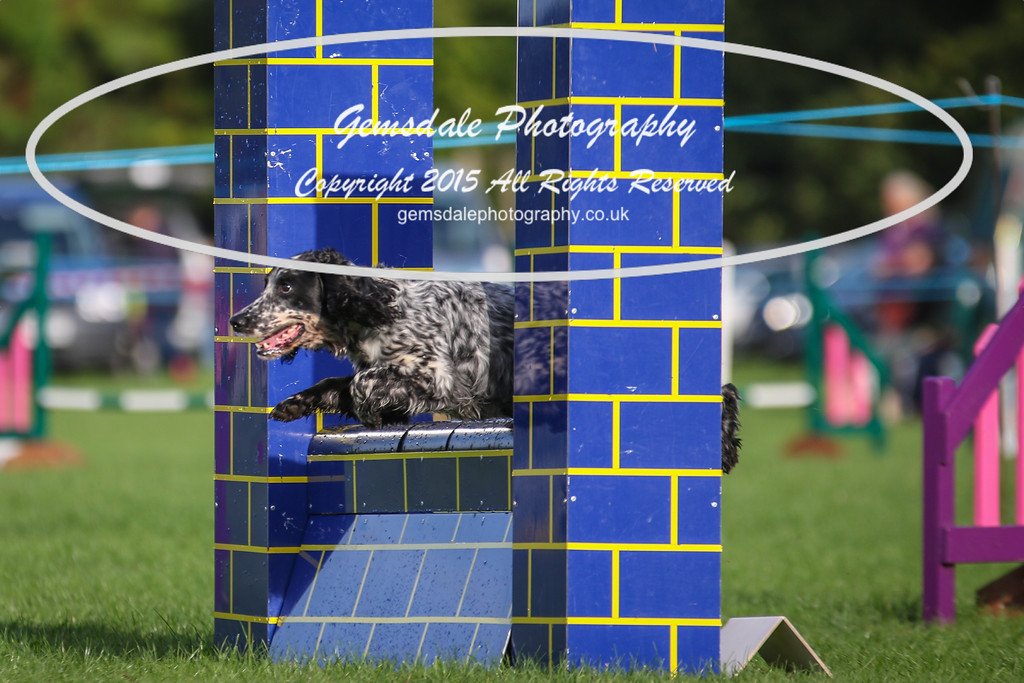Southdowns Agility 25th September 2016-2040