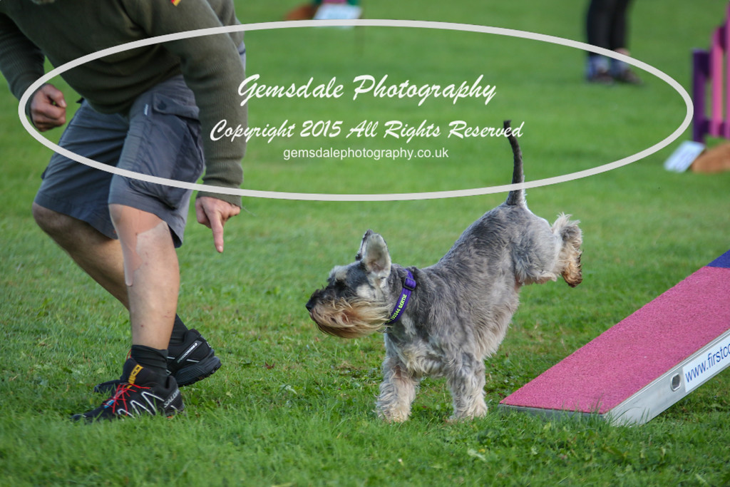 Southdowns Agility 25th September 2016-2016