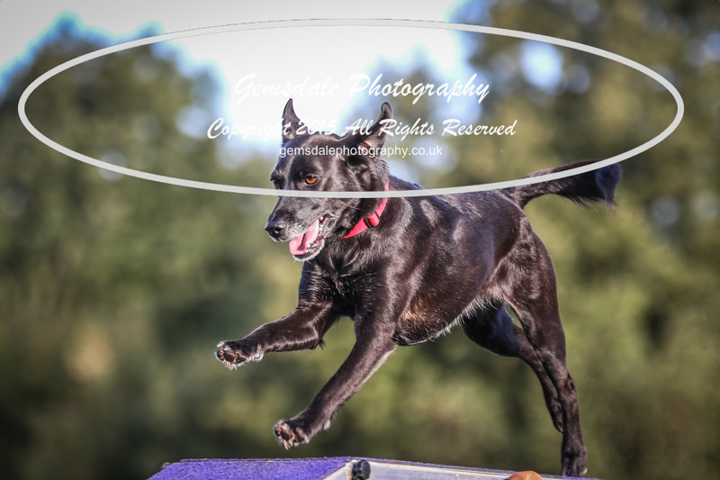 Southdowns Agility 25th September 2016-2042
