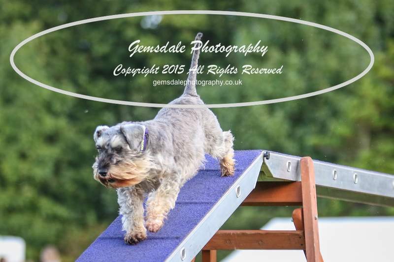Southdowns Agility 25th September 2016-2012