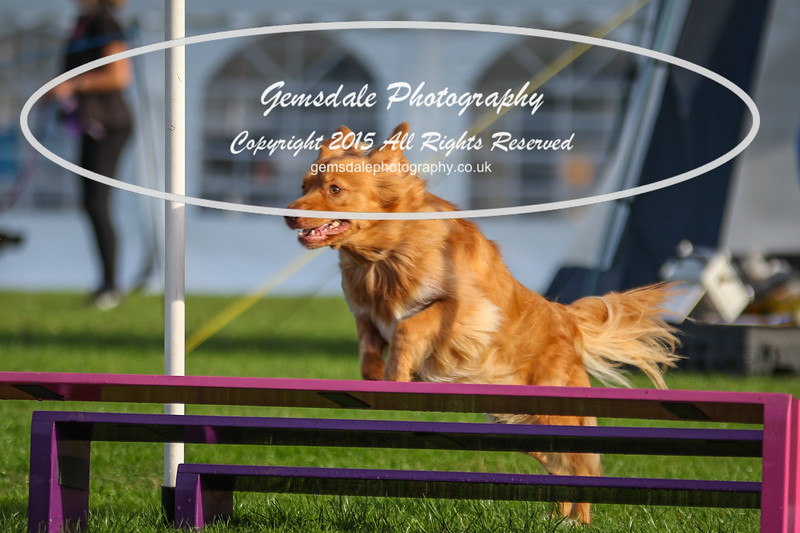 Southdowns Agility 25th September 2016-2031