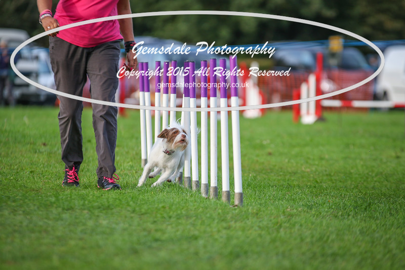 Southdowns Agility 25th September 2016-2000
