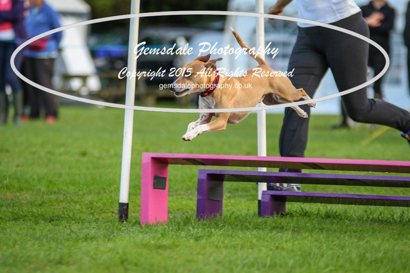 Southdowns Agility 25th September 2016-2017