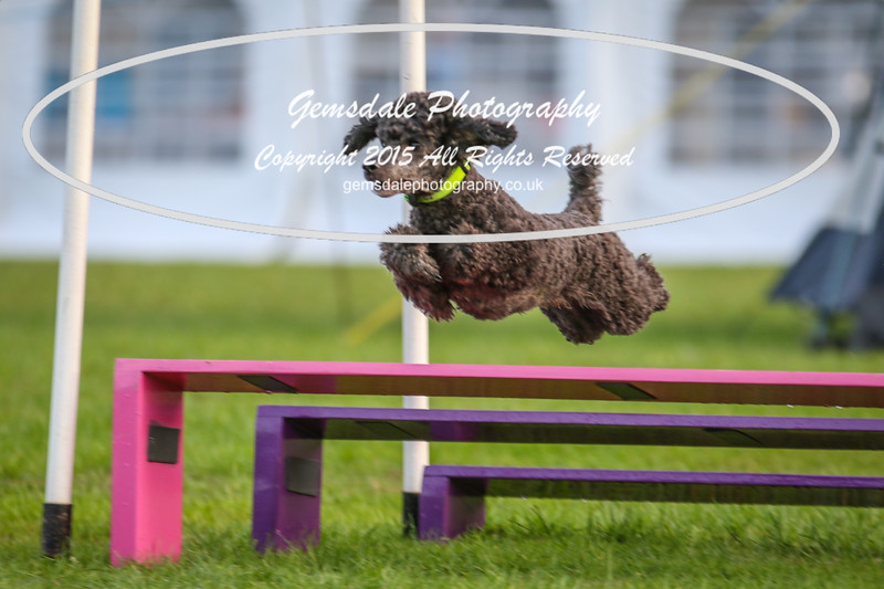 Southdowns Agility 25th September 2016-2005