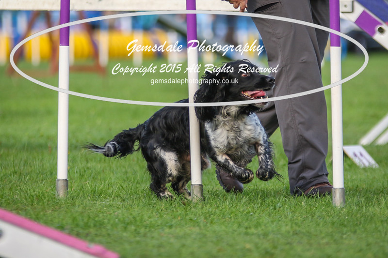 Southdowns Agility 25th September 2016-2027