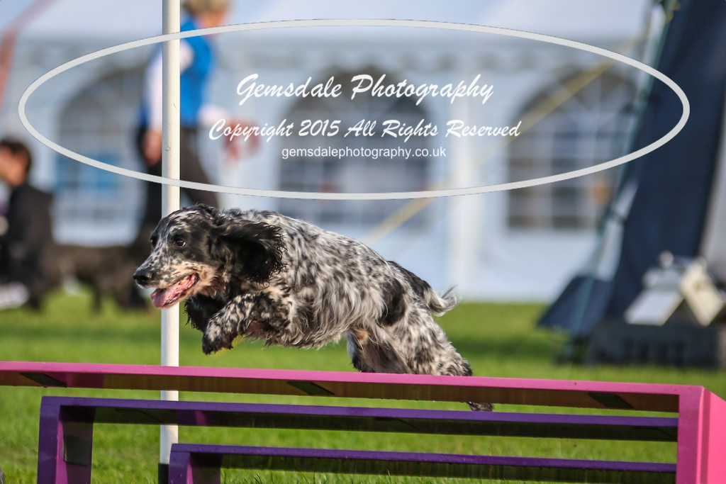 Southdowns Agility 25th September 2016-2037