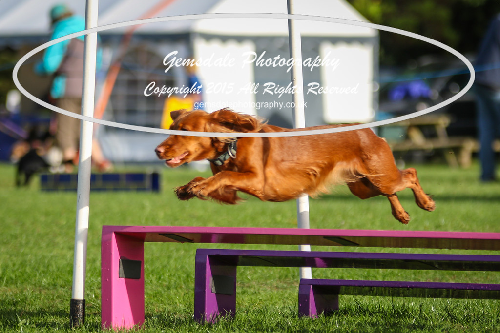 Southdowns Agility 25th September 2016-2046