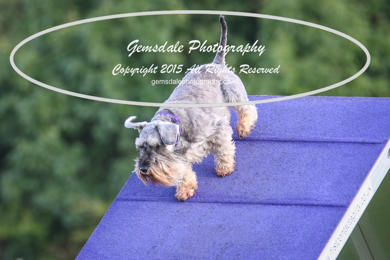 Southdowns Agility 25th September 2016-2015