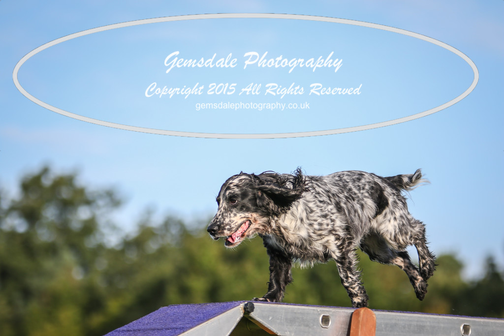 Southdowns Agility 25th September 2016-2039
