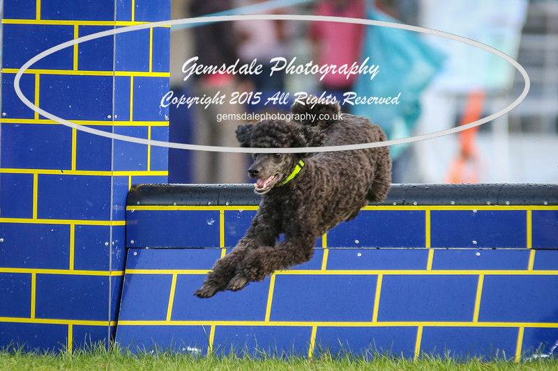 Southdowns Agility 25th September 2016-2009