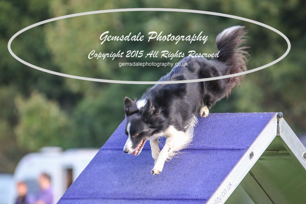 Southdowns Agility 25th September 2016-2003