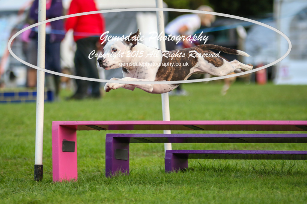 Southdowns Agility 25th September 2016-2020