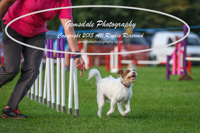 Southdowns Agility 25th September 2016-2001