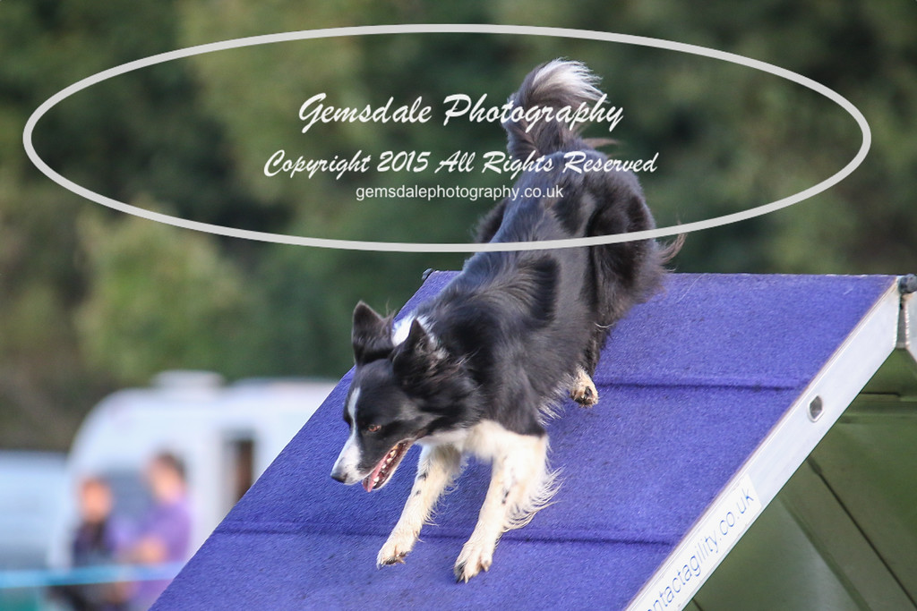 Southdowns Agility 25th September 2016-2004