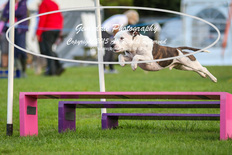 Southdowns Agility 25th September 2016-2019