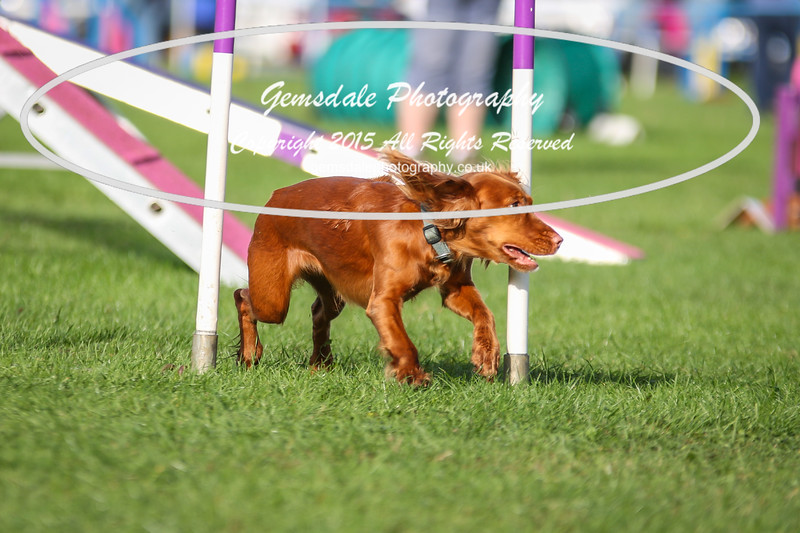 Southdowns Agility 25th September 2016-2047