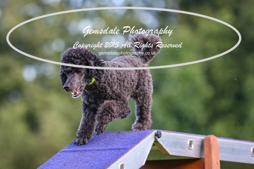 Southdowns Agility 25th September 2016-2008