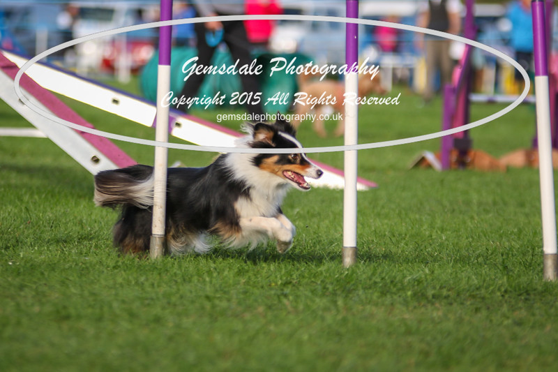 Southdowns Agility 25th September 2016-2045