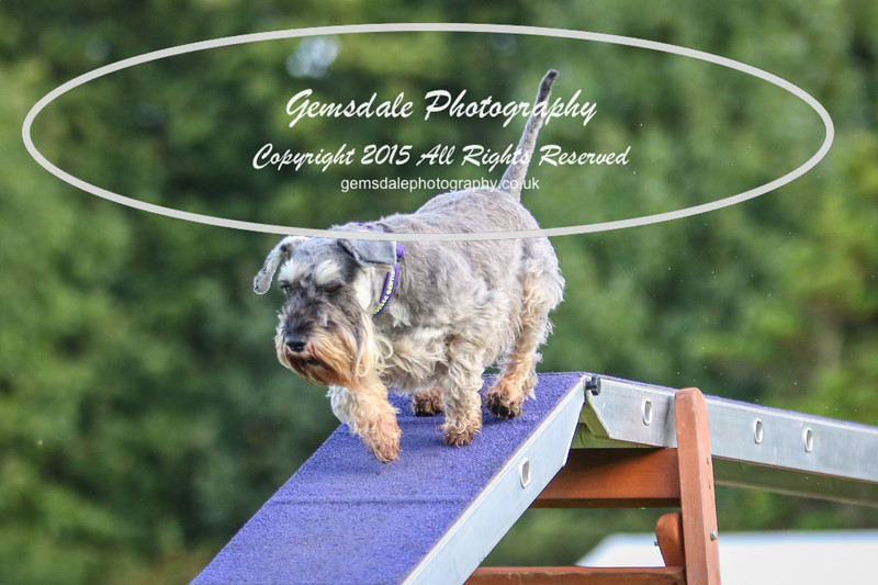 Southdowns Agility 25th September 2016-2011