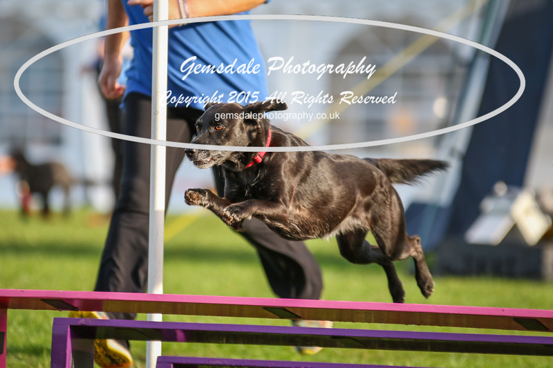 Southdowns Agility 25th September 2016-2041