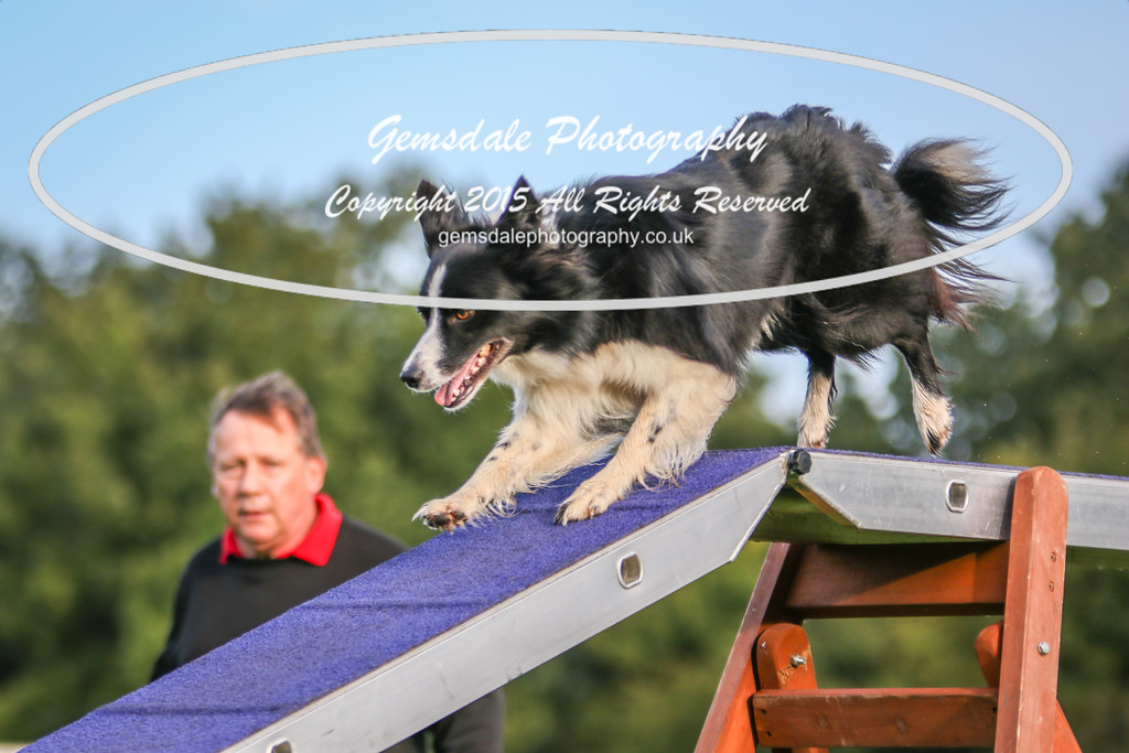 Southdowns Agility 25th September 2016-2002